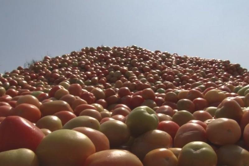 Ha sido un año catastrófico para las hortalizas