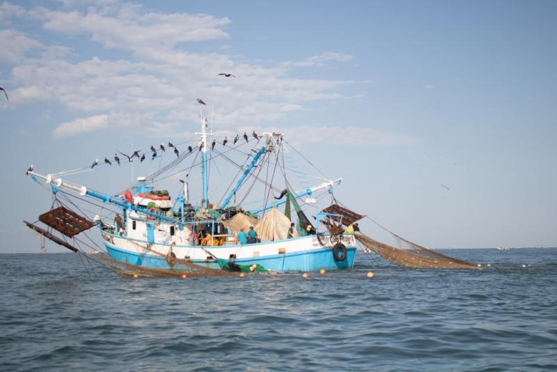 El 15 de marzo inicia la veda del camarón en el Pacífico