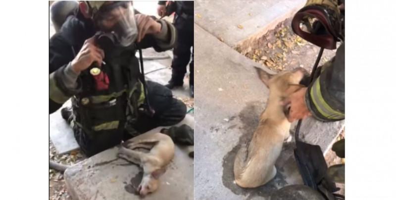 ¡Todas las vidas importan! Bomberos de Culiacán reviven a perrito intoxicado por incendio (video)