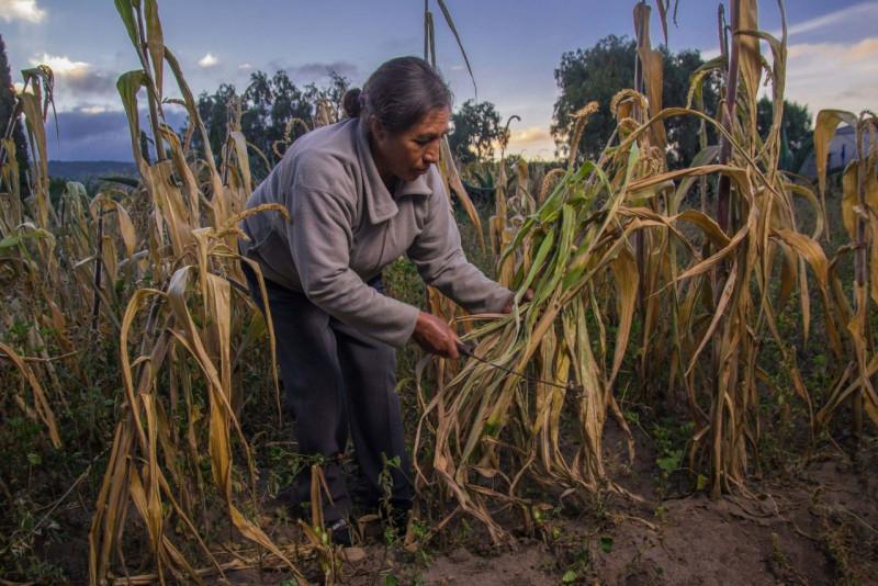 Programas prioritarios de Agricultura reconocen y estimulan la participación de las mujeres en el sector primario