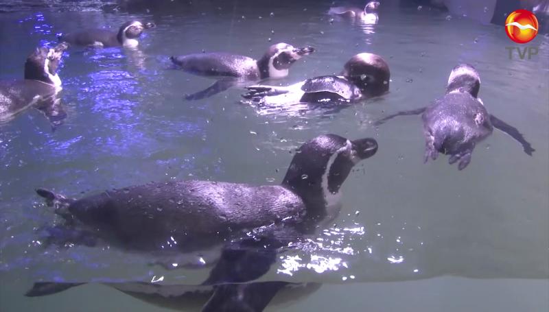 ¡Mazatlán ya tiene Pingüinario!