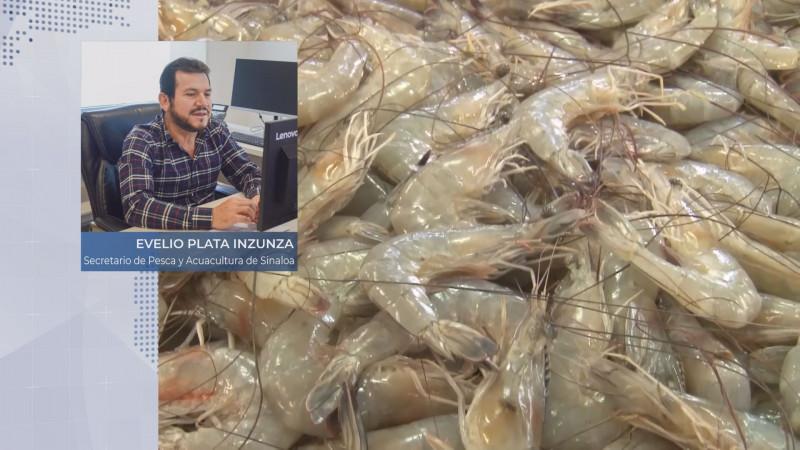 Embargo al camarón mexicano tendría serias consecuencias: Evelio Plata