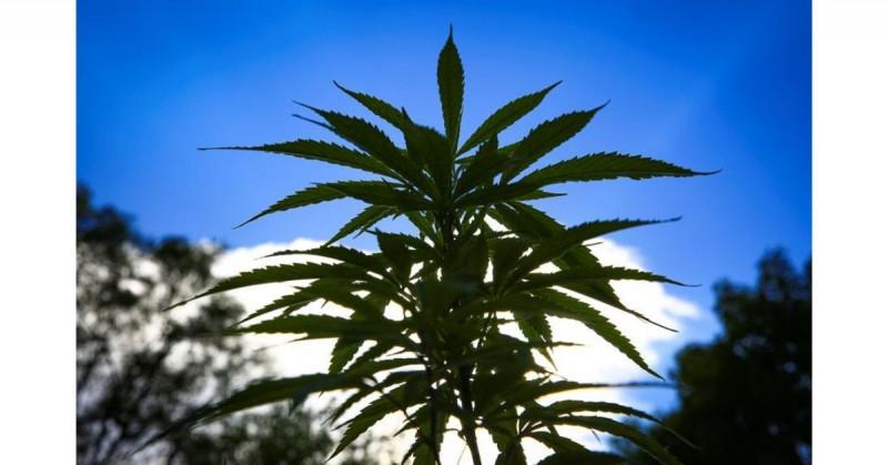 La legalización de la marihuana parece inminente y la industria espera ganancias económicas enormes