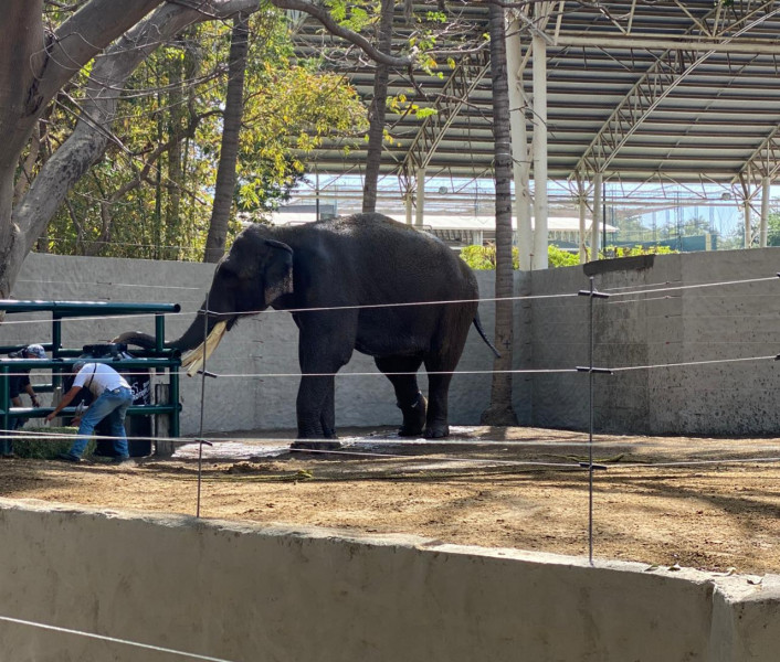 """Acusa Paola Rolex """"montaje"""" en supuesto rescate del elefante """"Big boy"""""""