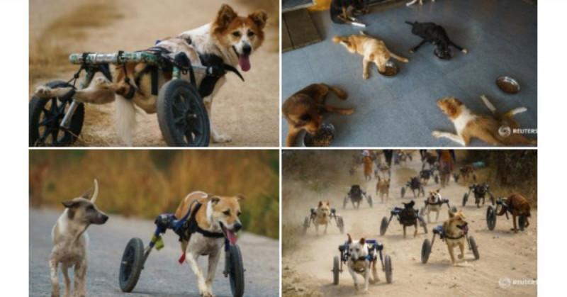 Perros discapacitados corren en grupo tras recibir sus prótesis (video)