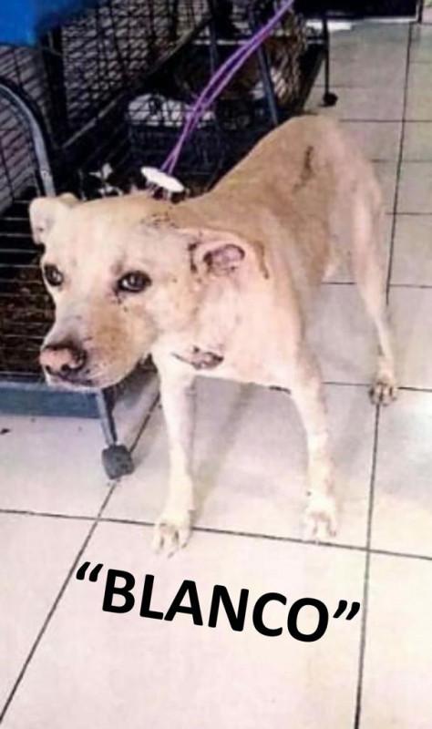 Celebra protectora  primera sentencia condenatoria a agresor de animales en Cajeme