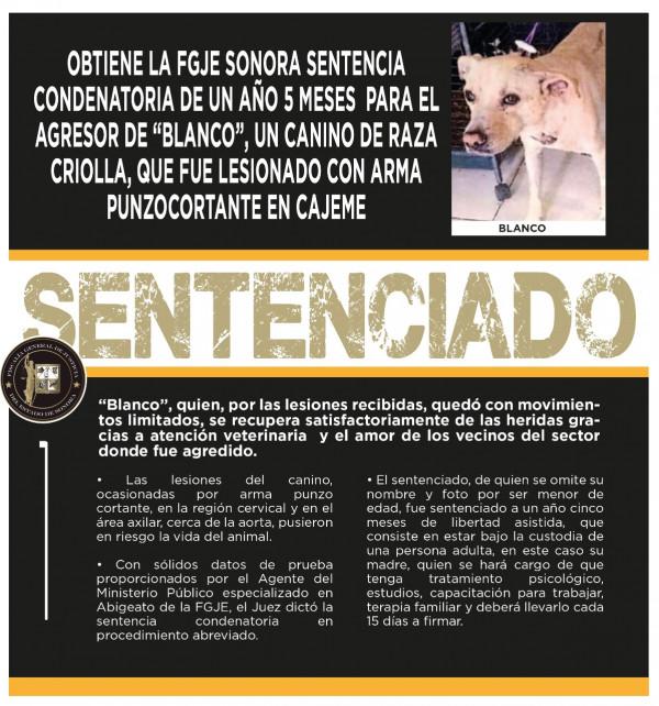 """FGJE impone 1 año y 5 meses de sentencia a agresor de """"Blanco"""""""
