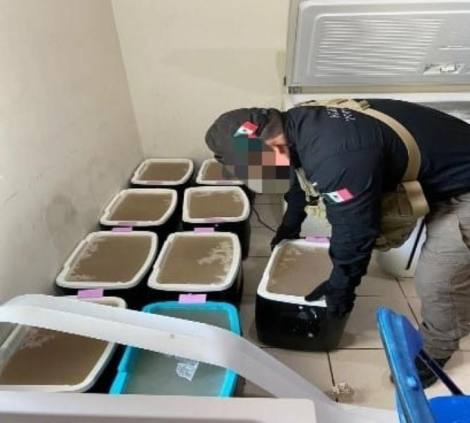 Ejecuta la FGR  orden de cateo en un inmueble ubicado en Culiacán