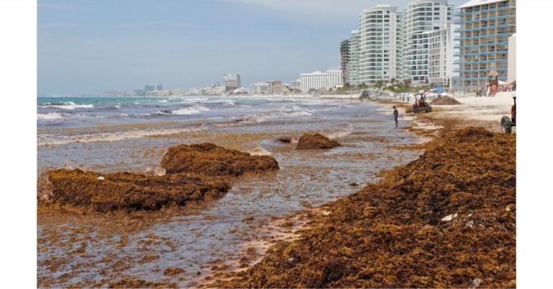 El sargazo amenaza con cuadriplicarse en mayo y junio e inundar Cancún como en 2019