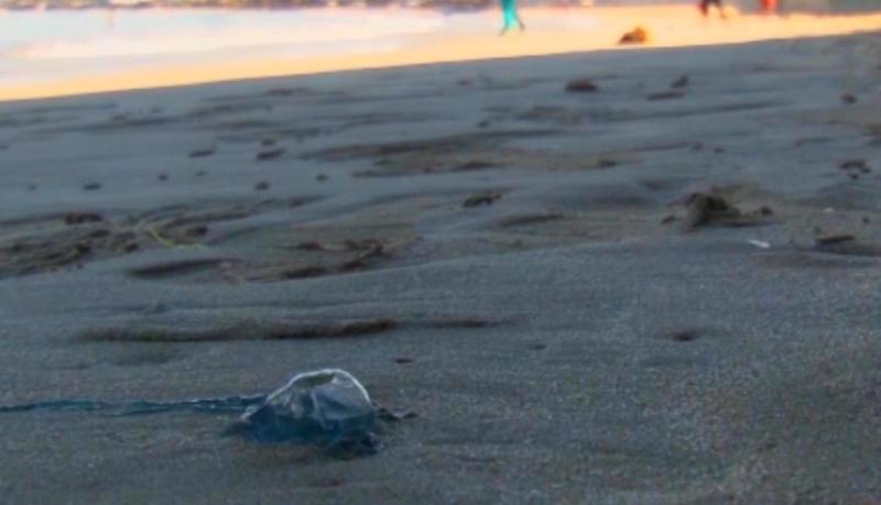 Llegan los temibles 'seres azules' a las playas mazatlecas