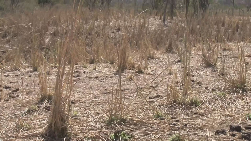 Moviliza a gobierno estatal la falta de lluvias..