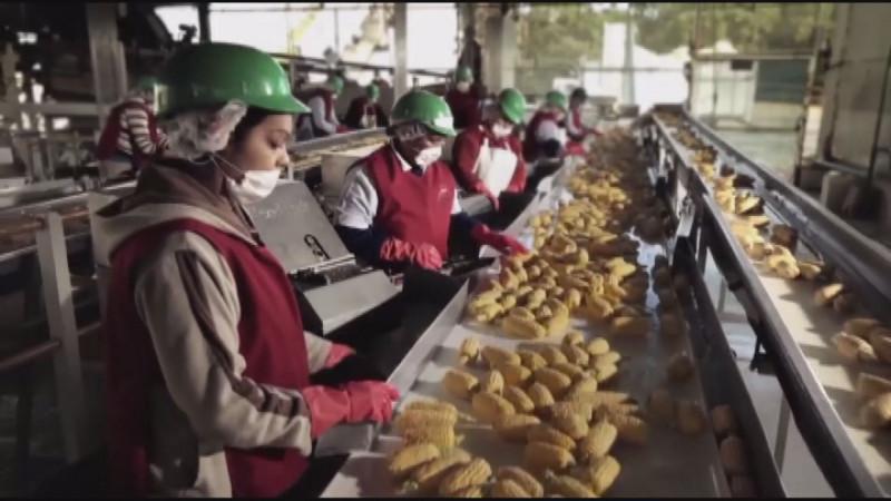 20 millones 70 mil 483 de empleos registrados ante el IMSS