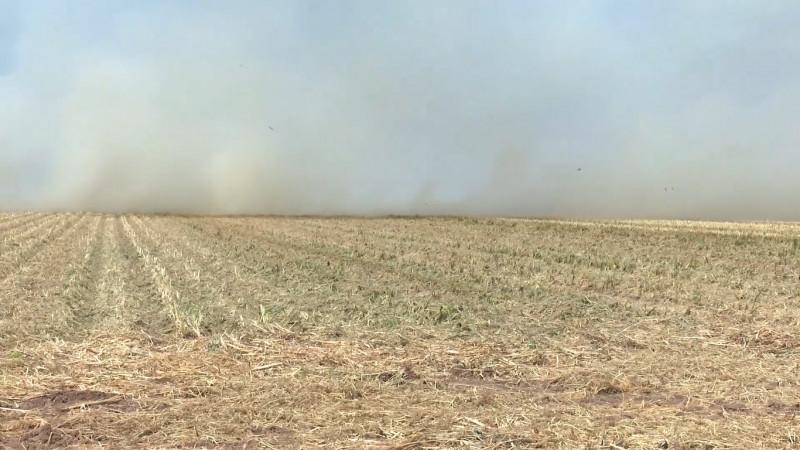 Llaman a productores agrícolas a no quemar la soca de maíz