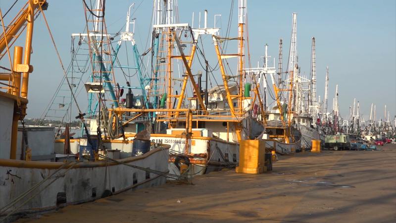 Parado el sector pesquero de altamar