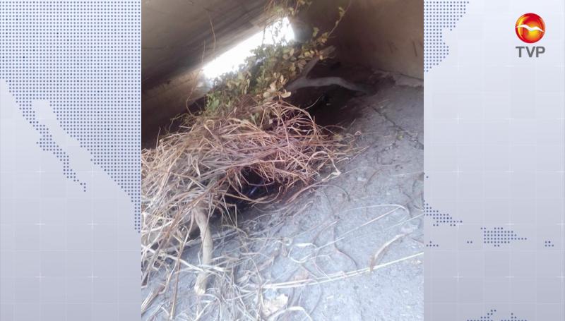 Encuentran hombre muerto debajo de puente de Escuinapa