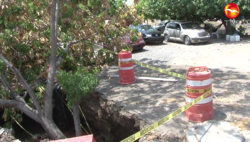 Cae árbol en socavón en la Colonia Burócrata