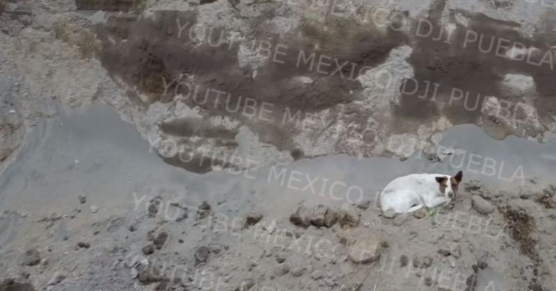 Otro perro cae al socavón de Puebla: a dos semanas del rescate de Spay y Spike