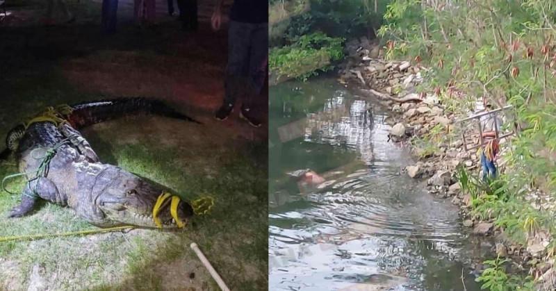 Cocodrilo atrapa y mata a mujer que lavaba ropa en laguna de Tampico (video)
