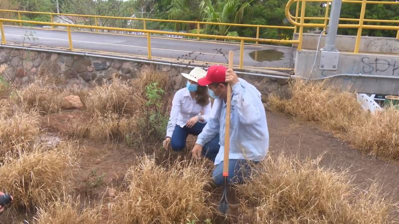 El Cerro de la Memoria esta recibiendo vida con el programa de reforestación