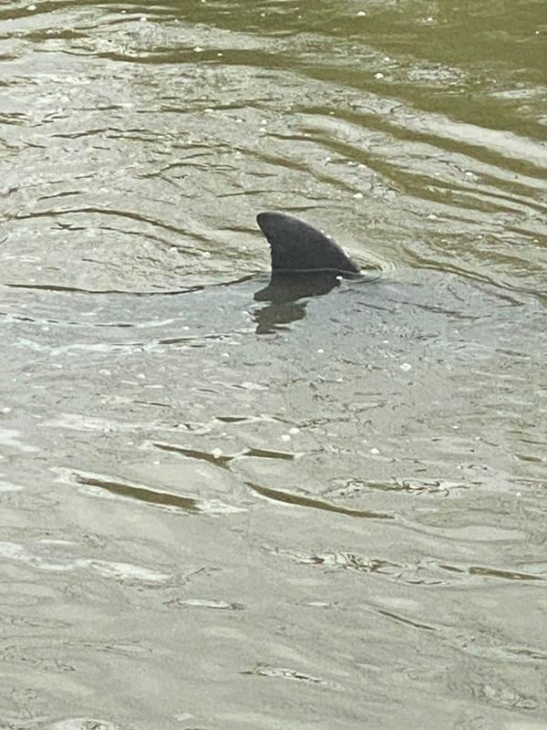 Buscan rescatar a dos delfines