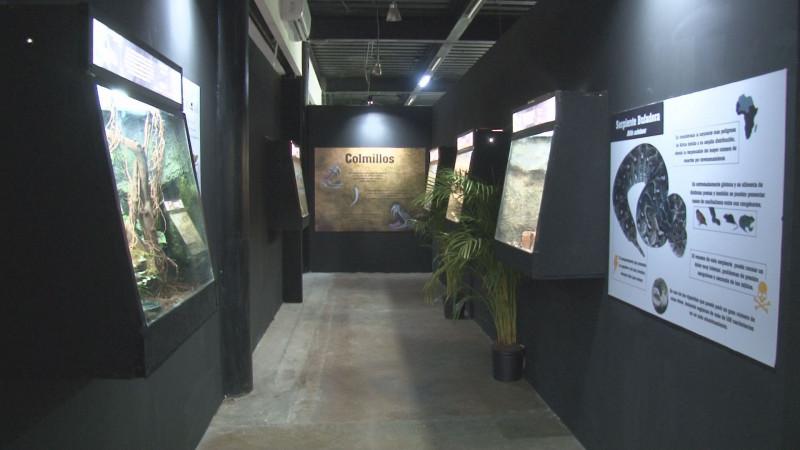 Desde Puebla hasta Sinaloa, llega el museo viviente de los reptiles más venenosos del mundo