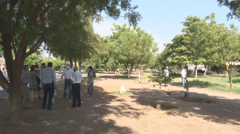 Festejan el día del árbol plantando nuevos arboles en la ciudad.