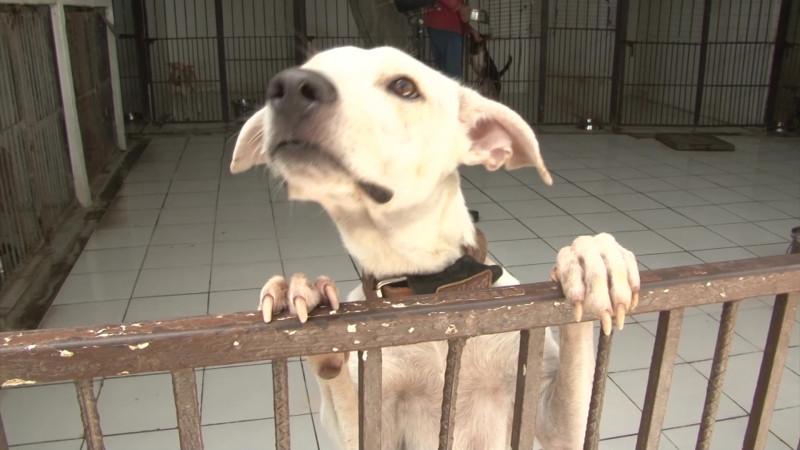 Coronavirus afecta a mascotas