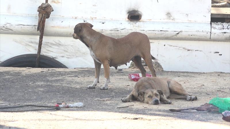 """Mascotas afectadas por """"golpe de calor"""" en Mazatlán"""