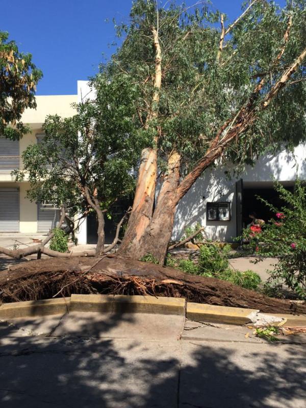 Dirección de servicios públicos ha recibido 150 reportes de árboles caidos