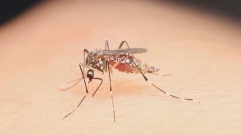 No todo es COVID, se siguen realizando acciones contra el mosco transmisor del dengue