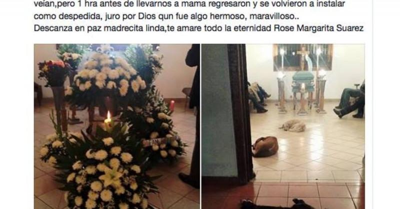 Margarita fue despedida por cuatro de los muchos perros callejeros que alimentó en vida