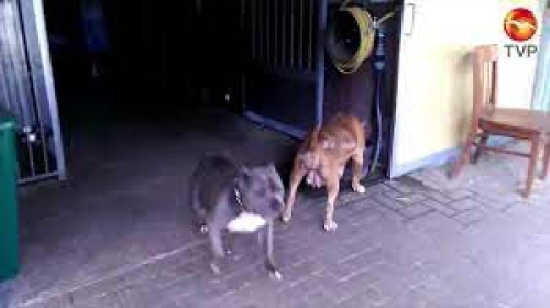 Campaña de esterilización de perros y gatos en Infonavit Solidaridad