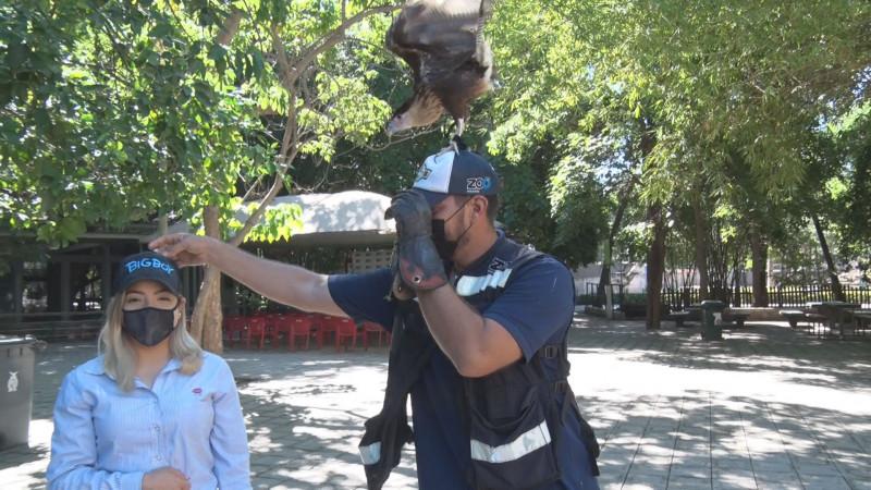 Jack el quelele realiza función educativa y social en el zoológico de Cln
