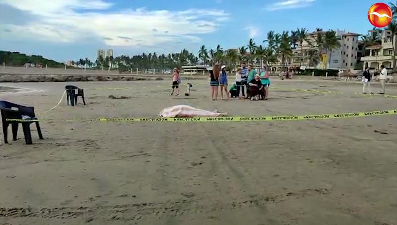 Turista de Chihuahua muere ahogado en Mazatlán