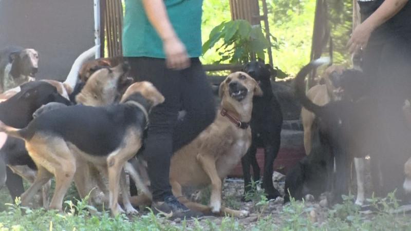 Confían que próxima legislatura saque adelante la Ley de Protección Animal