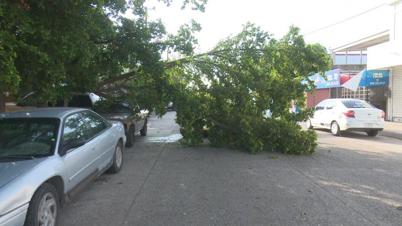 Fuertes vientos provocan apagones y daños en vehículos