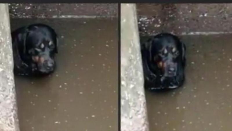 Rescatan a perrito que estaba en arroyo