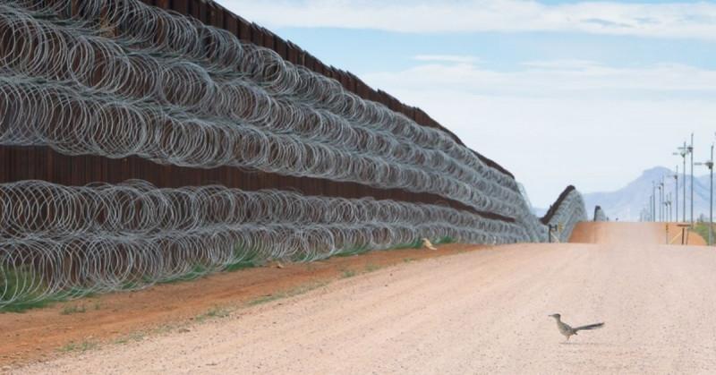 """Mexicano gana concurso """"Fotógrafo de aves del año"""" por imagen de correcaminos frente al muro"""
