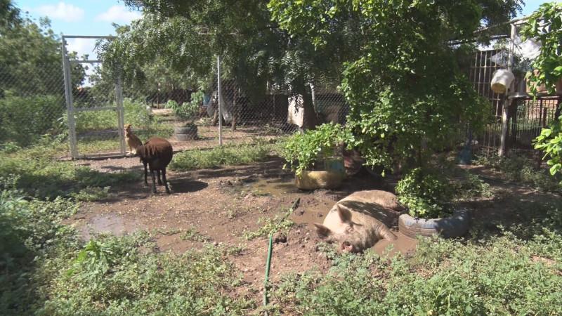 Sol y Dolly viven felices en el santuario de Huellita con Causa