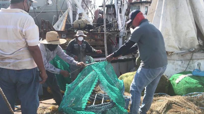 Recertificación de camarón mexicano: Será cuestión de días