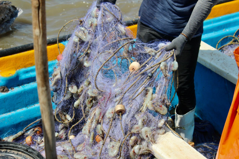 Positivas expectativas en la nueva temporada de captura del camarón
