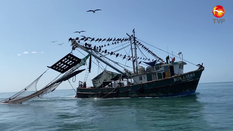 Ganan más pero rinde menos: Pescadores