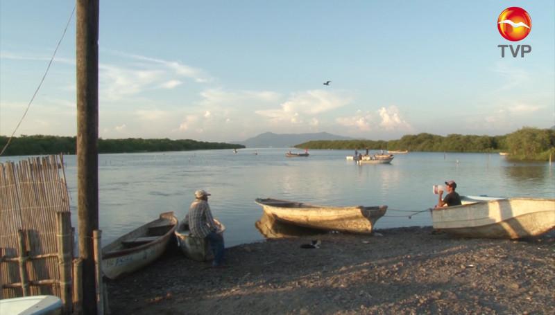 Baja producción de camarón en Laguna del Caimanero: Cooperativa de Potrerillos, Rosario