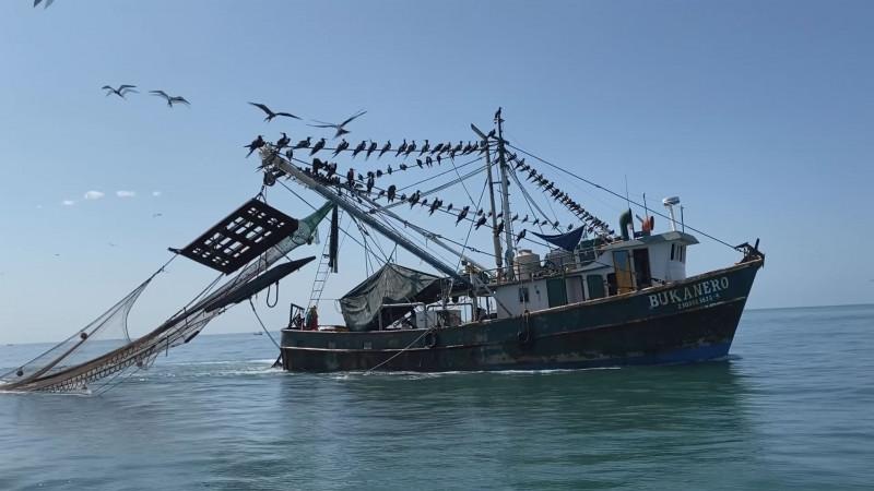 10 mil toneladas de camarón se podrá exportar a Estados Unidos
