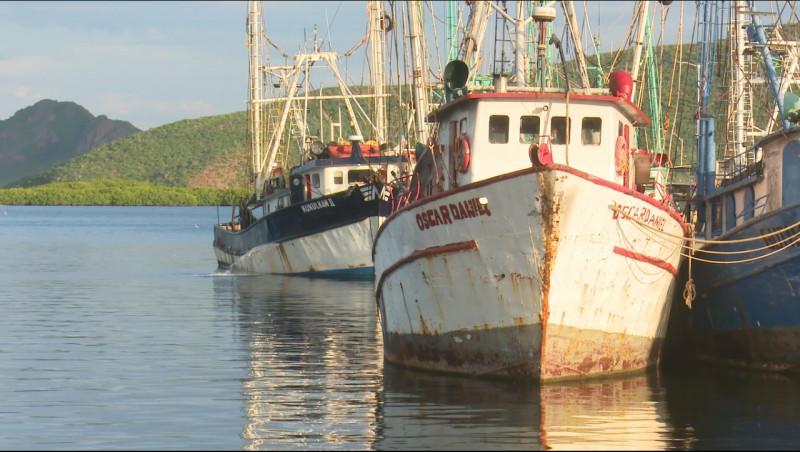 Confían pescadores en autoridades para poder exportar camarón a EU