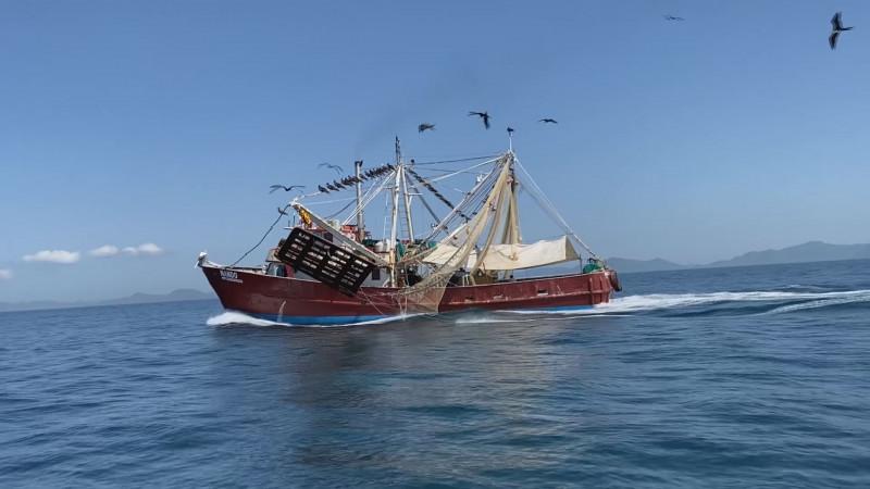 Si las capturas de camarón en el sur de Sinaloa no mejorar será un crisis a la pesca