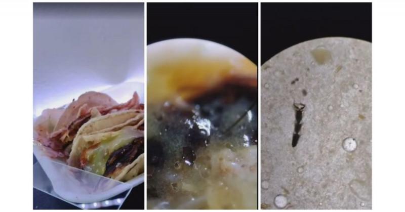 Analizan tacos callejeros con microscopio y hasta partes de moscas encuentran (video)