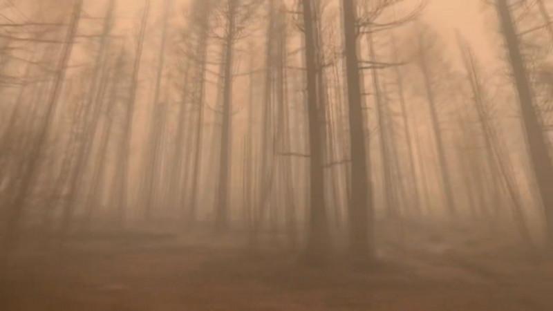 Carlos Angulo tiene solución a los incendios forestales