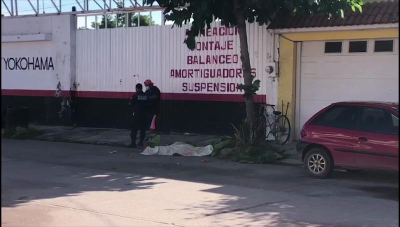 Hombre cae de árbol y muere en Escuinapa