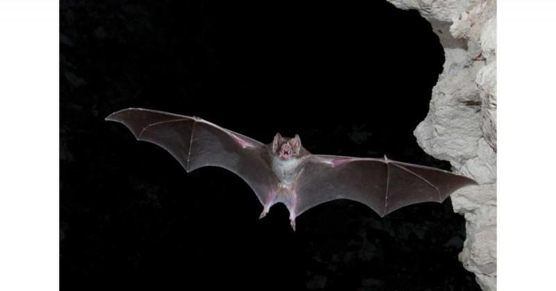 Anciano muere después de haber despertado junto a un murciélago